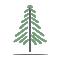 Pine Tree Pediatric Dentistry